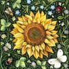 sunflower8143
